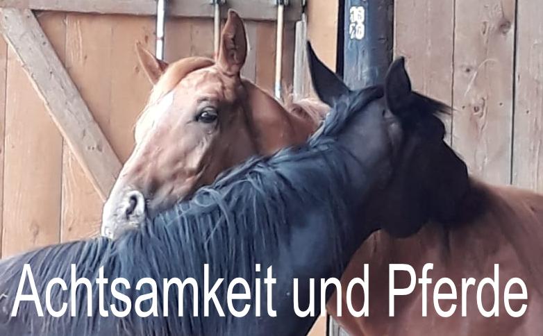 Achtsamkeit und Pferde